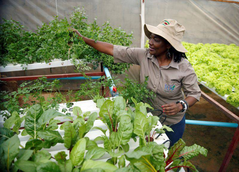 Africana creó un jardín hidropónico en el patio de su casa y ahora es proveedora de restaurantes | Ecología | La Revista | El Universo